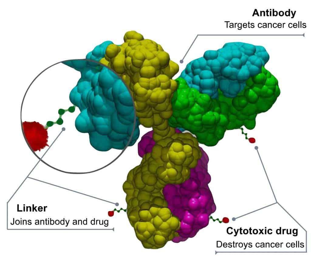 Schematic illustration of antibody-drug conjugate (ADC