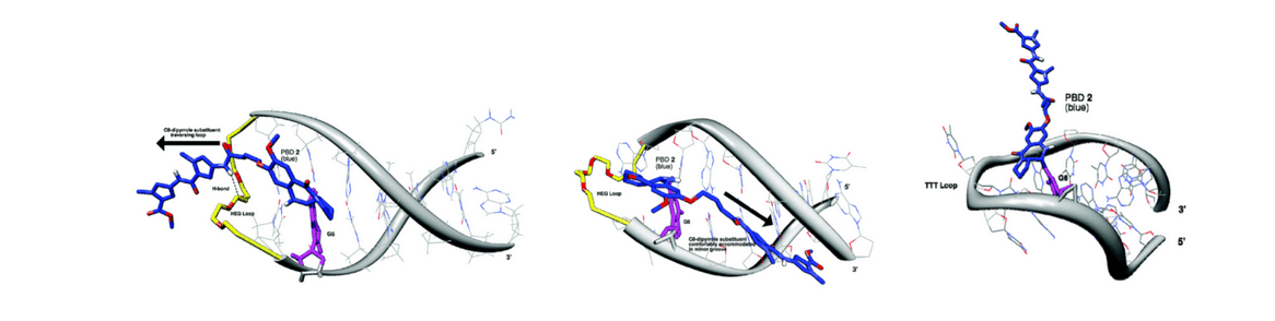 PBD dimer mode of action. PBD dimers bind to specially configured guanidine residues on different positions of the dsDNA helix and cause the crosslinking of DNA strands (Adapted from Org. Biomol. Chem., 2015).