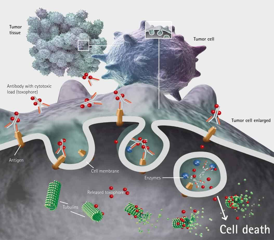 Pharmaceuticals   Free Full-Text   Antibody-Drug