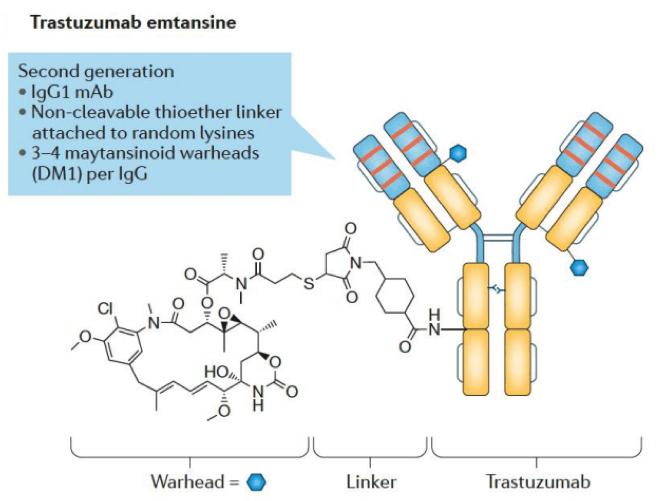 Trastuzumab Emtansine
