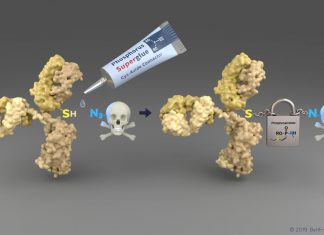 A new technology enables a simple way of connecting the cytsteine residues (SH) of a tumor-sensing antibody (yellow) to the cytotoxic payload. The emerging linker is highly stable during blood circulation and enables therefore a safe transport to the tumor side. Image courtesy: Barth van Rossum/FMP